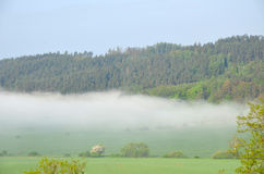 Field. And forest covered with fog stock photo