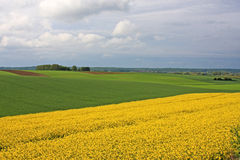 Rape field in France Royalty Free Stock Photo