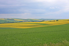 Rape field in France Stock Image