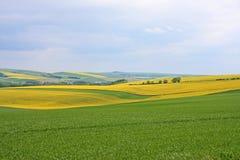 Rape field in France Stock Photo