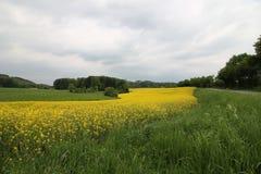 A Rape field Royalty Free Stock Photo