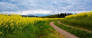 field and gray clouds . royalty free stock photos