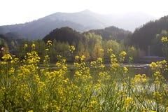 Rape field and lake Stock Photo