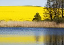 Rape field and lake Stock Images