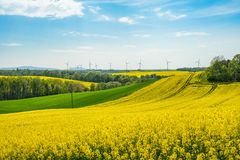 Rape Field Landscape Stock Image