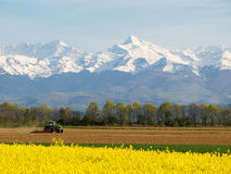 Rape field and mountains Royalty Free Stock Image