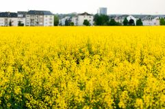 Rape field on the outskirts of Howald. Beautiful blooming rape field on the outskirts of Howald, Luxembourg Stock Photography
