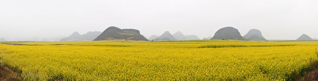 Rape Field Panorama Stock Photo