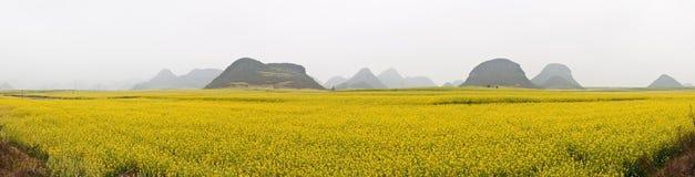 Field Panorama Stock Photo