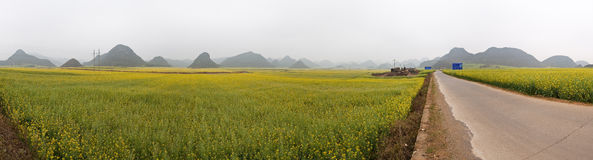 Rape Field Panorama Royalty Free Stock Photos