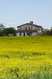 Rape field and solar panels Royalty Free Stock Photography