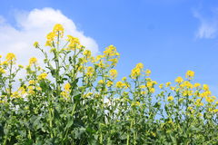. A field with in the spring stock photo