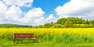 Rape field in spring Stock Photography