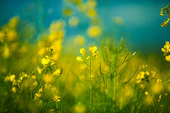 Field on a Summer Evening royalty free stock photo