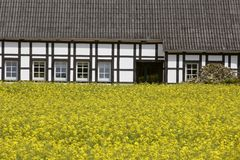 Rape field with timbered house in May, Lower Saxony, Germany Stock Photography