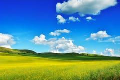 Field in Transylvania - Romania.  royalty free stock images