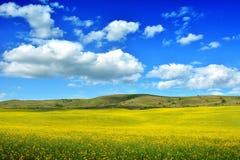Field in Transylvania - Romania.  stock image