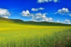Field in Transylvania - Romania.  royalty free stock photography