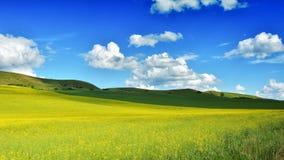 Field in Transylvania - Romania.  stock images