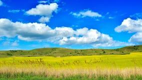 Field in Transylvania - Romania.  stock photos