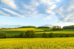 Rape field under blue sky Stock Images