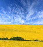 Rape field under nice sky Royalty Free Stock Images