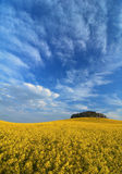 Rape field under sky Royalty Free Stock Image