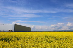Rape field Stock Image