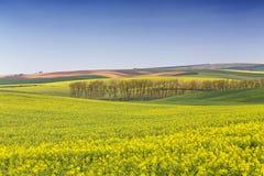 Rape field waves, South Moravia Stock Images