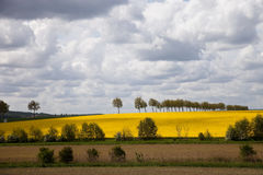 Rape field and white clouds. Stock Photography