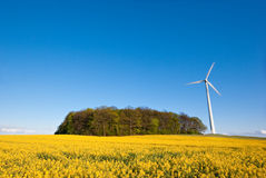 Rape field and wind turbine Royalty Free Stock Photography