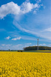 Rape field and wind turbine. The picture shows a rape field and a wind turbine Stock Photography