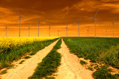 Rape field with wind turbines in the sunset Stock Photos