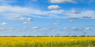 Rape Field and Windmills Stock Photo
