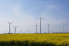 Rape field with windmills Royalty Free Stock Photos