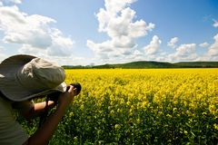 Rape field3 Royalty Free Stock Images