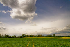 Rape fields Royalty Free Stock Images