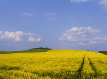 Fields. In full bloom royalty free stock photography