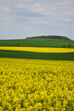 Rape fields Stock Images
