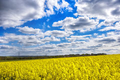 Rape fields and blue cloudy sky. Yellow rape fields and blue cloudy sky in the warm spring sunny day Royalty Free Stock Photography