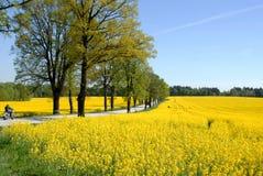 Rape fields in Bohemia Royalty Free Stock Image