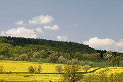 Rape fields and cherry trees Royalty Free Stock Photos