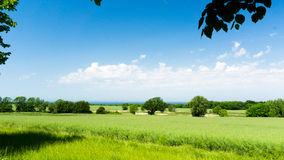 Rape fields at the coast. Of baltic sea Royalty Free Stock Image