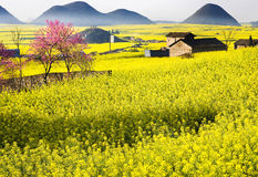 Rape fields  & peach blossom Stock Photos