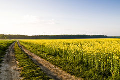 Rape fields in Poland Stock Image