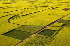 Rape fields & road Stock Images