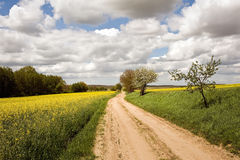 Rape fields with road Royalty Free Stock Photo
