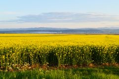 Rape fields in Romania Royalty Free Stock Photos