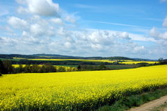 Rape fields scenery Royalty Free Stock Photography