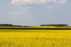 Rape fields in springtime. Yellow rape fields are dotting  the german landscape in springtime Royalty Free Stock Photography